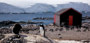 PortLockroy-antarctica-post-office